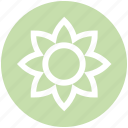 garden flower, aroma, flower, plant, nature