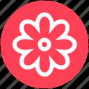 blossom, flower, garden flower, marquis, nature