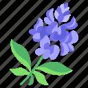 blue, bonnet