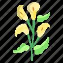 calla, lily