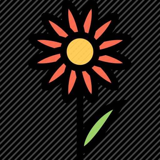 camomile, flower, flowerbed, garden, plant icon
