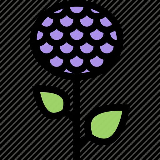 aster, flower, flowerbed, garden, plant icon