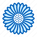 aster, blossom, flower icon