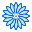 bloom, blossom, flower, gerbera