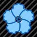 blossom, flower, garden, hibiscus