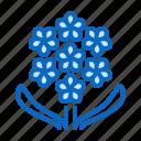 blossom, flower, flowers, hyacinth