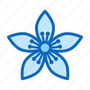 blossom, flower, hypericum icon