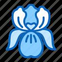blossom, floral, flower, iris