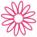 bloom, daisy, floral, flower, garden, nature, petals icon