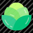 cabbage, diet, health, vegan, vegetable icon