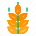 bread, gluten, health, plant, wheat