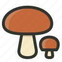 boletus, food, fungi, mushrooms
