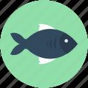 fish, food, healthy food, raw fish, seafood