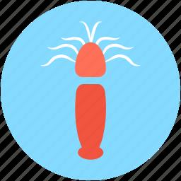 food, mantis shrimp, seafood, squid, stomatopod icon