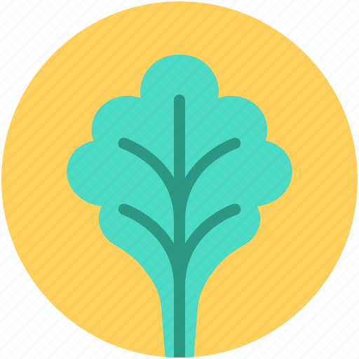 food, green veggie, lettuce, spinach, vegetable icon