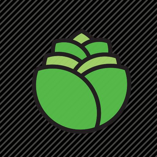 food, lettuce, salad, vegetable icon
