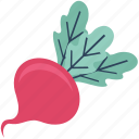 diet, nutrition, raw food, root beer, root vegetable, turnip, vegetable icon