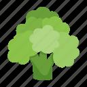 food, broccoli, vegetable
