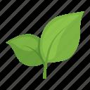 food, tea, leaves