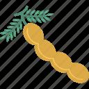 dry fruit, food, groundnut, nut, peanut icon