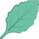 ecology, green foliage, greenery, leaf, nature icon