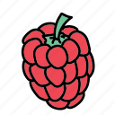 food, fruit, ingredient, raspberry, sweet, taste icon