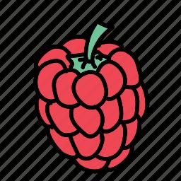 food, fruit, ingredient, raspberry, sweet, taste icon