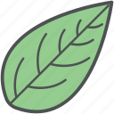 eco, foliage, leaf, nature, plant leaf, tree leaf icon