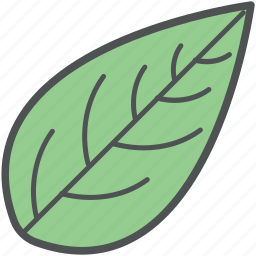 eco, foliage, leaf, nature, plant leaf, tree leaf icon