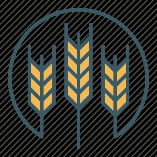 agriculture, barley, crops, farm, farming, harvest, wheat icon