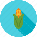 corn, food, healthy, maize, nutrition, ripe, vegetable