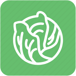 cabbage, diet, food, healthy eating, vegetable icon