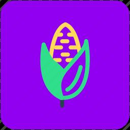 corn, maize, pole corn, sugar corn, sweet corn icon