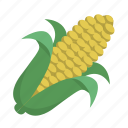 cob, corn, farm, farmer, food, grain, on