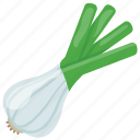 baby onion, cooking vegetable, green onion, raw onion, spring onion icon