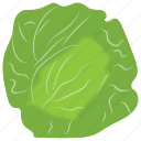 cabbage, cabbage flower, green vegetable, salad vegetable, vegetable