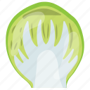 cabbage, iceberg lettuce, iceberg nutrition, salad vegetable, vegetable icon
