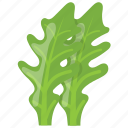 arugula, edible leaves, green garnishing leaves, kale, vegetable herb icon
