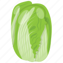 cabbage, cabbage flower, iceberg, salad vegetable, vegetable icon
