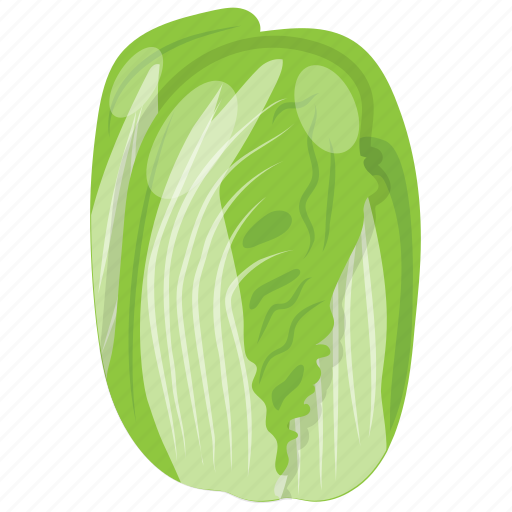 cabbage, cabbage flower, iceberg, salad vegetable, vegetable icon