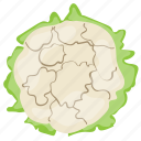 broccoli, cauliflower, cauliflower nutrition, diet vegetable, healthiest vegetable icon