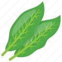 green leaves, laxative, sorrel leaves, soup leaves, vegetable leafs icon