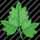 garden parsley, garnishing food, green leafy vegetable, parsley, parsley leaves icon