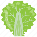 garnshing leaf, leafy vegetable, lettuce, lettuce romaine, salad leaf icon