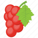 berries, grapes, healthy fruit, pulpy fruit, red grapes icon
