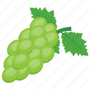 bunch of grapes, bunch of green grapes, grapes, juicy fruit, sweet fruit icon
