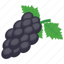 black grapes, concord grapes, grapes, seedless fruit, slipskin grapes icon