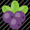 blueberries, bunch of berries, cherry, purple berries, raspberry