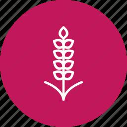 corn, grain, wheat icon