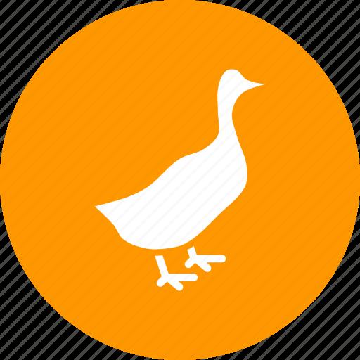 bird, duck, farm, livestock, poultry icon